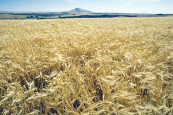 Syngenta close to being sold