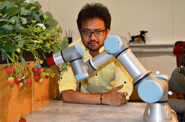 Robotics key to strawberry fields forever | Business Weekly