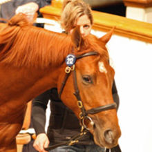 Picture courtesy: Tattersalls