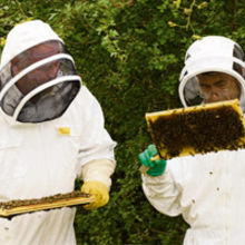 Peter Wordingham (left) and Paul Savvides with honeycombs. Photo credit : Alan Bennett/Media Imaging Solutions