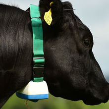 Cambridge Industrial Design (CID) has designed a new tracking collar for cows