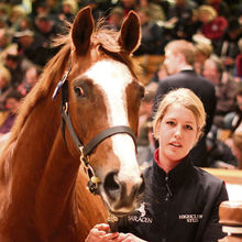 Hanky Panky at Tattersalls auction
