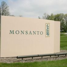 monsanto, bayer