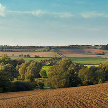 Savills farmland East of England