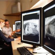 VetCT brings specialist teleradiology and telemedicine services to vets
